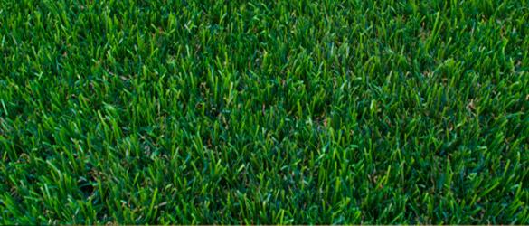 Detalle césped artificial Dolce de Turfgrass